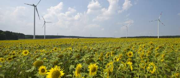 Risikohinweise bei Umweltinvestments oft unzureichend